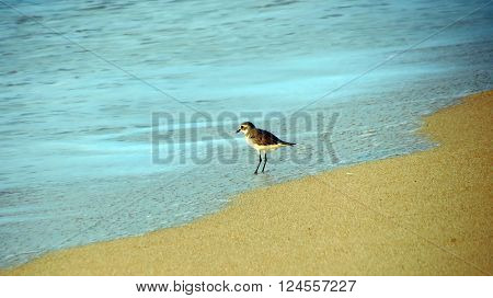 A small bird sitting on beach waiting for its prey to be washed ashore by sea wave.