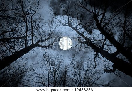Night mysterious landscape in cold tones - silhouettes of the bare tree branches against the full moon and dramatic cloudy night sky