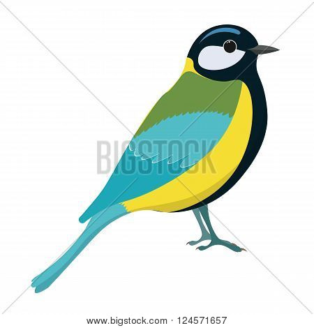 Tomtit bird vector illustration. Titmouse. Vector illustration of tomtit isolated on white background.
