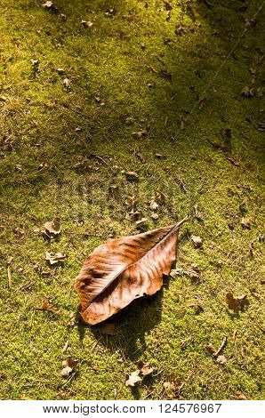 big leaf on ground