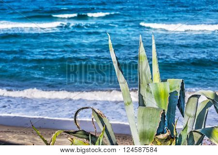 Agave by the sea in Sardinia Italy