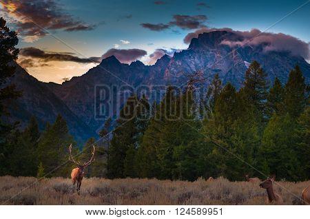 Grand Tetons Landscape