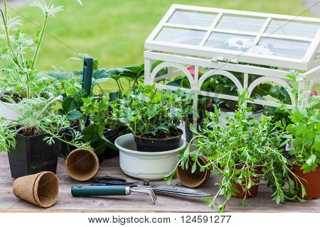 Gardening - Plants with flowers and herbs in garden