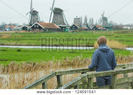 Man looking at rural landscape view with traditional Dutch windmills and old farm log houses