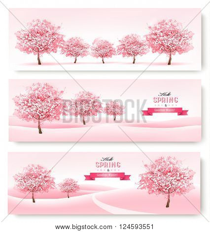 Three spring banners with pink cherry blossom trees. Vector.