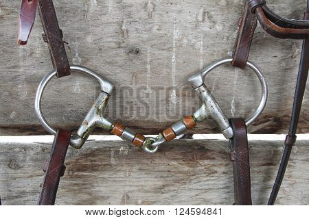 Closeup of horse D-ring snaffle bit with bridle straps