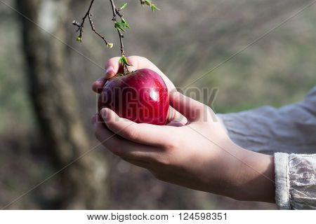 bio fresh red apple in female hand