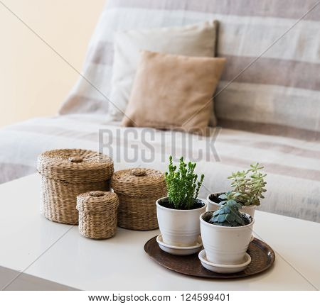 Cozy vintage home decoration: green plants and decorative wicker boxes on a table by the sofa with pillows, living room interior.