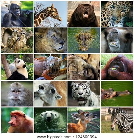 Collage with different wild animal faces .