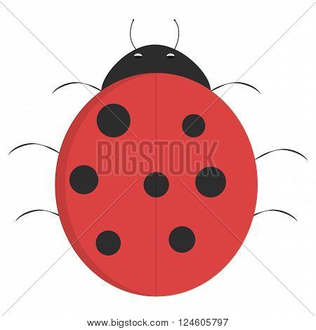 Cartoon ladybug illustrated ladybug isolated on white background