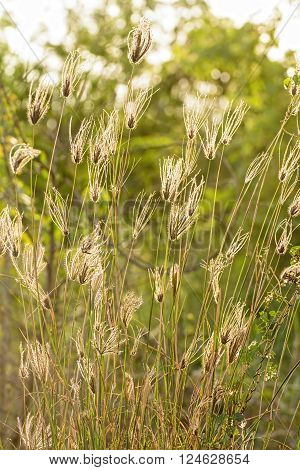 Poaceae is feels lonely. It is beautiful and outstanding.
