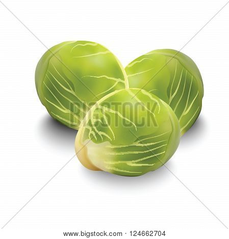 Brussels sprouts for your design, fresh and tasty vegetables