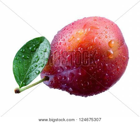 Plum. Fruit with drops isolated on white background