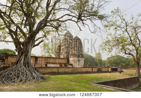 Gardeners clean the area around the ancient trees and temple Wat Si Sawai inside Sukhothai historical park Thailand. UNESCO World Heritage Site.