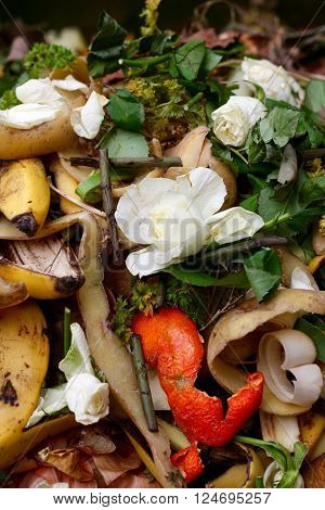 Fresh bio-waste and compost in the garden with white roses