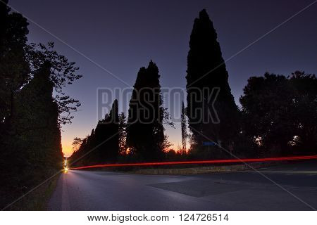 The cypress avenue of the old town of Bolgheri, night shot