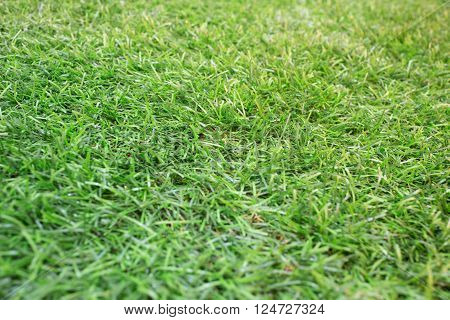 Artificial grass. artificial grass green background. artificial grass closeup.