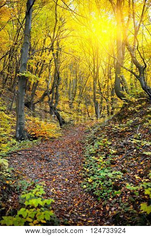 The path in the colorful autumn forest