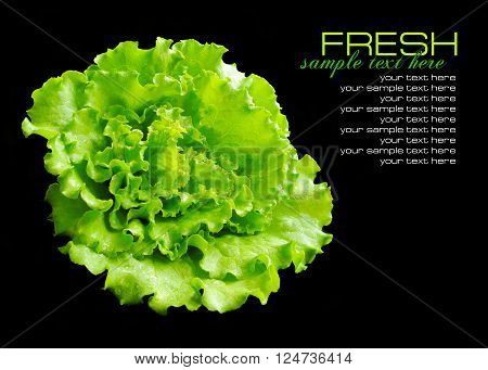 Fresh Green Salad Isolated On Black Background