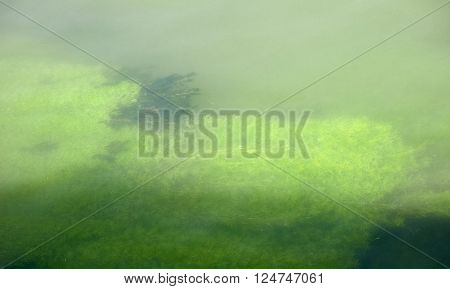 Green Algae Underwater