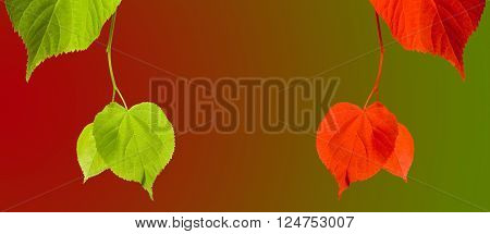 Green And Red Linden-tree Twigs On Multicolor Background