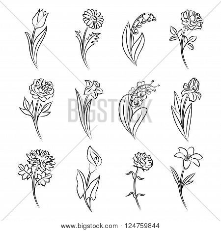 Collection of outlined flowers. Tulip chamomile lily of the valley rose peony narcissus orchid iris chrysanthemum calla carnation and lily In sketch hand drawn style. Vector illustration