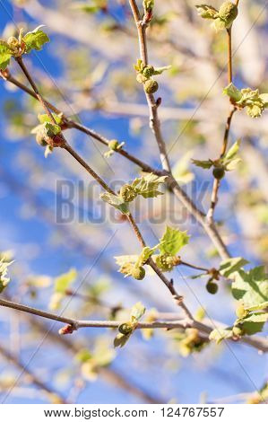 Trees are blooming with new life in spring.