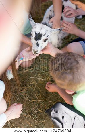 Several children gather round to pet a goat.
