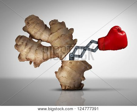 Ginger medicine concept as a natural herbal medicinal root opened with a boxing glove icon emerging with a 3D illustration mechanism to fight off disease and pain as a metaphor for holistic or eastern traditional medication.