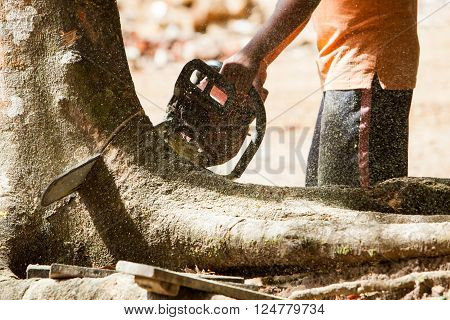 Man working in the forest with chainsaw