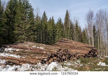 Forestry. Image of logs stacked in pile after felling