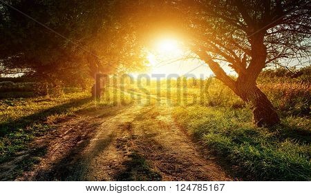 rural road at sunset in the woods