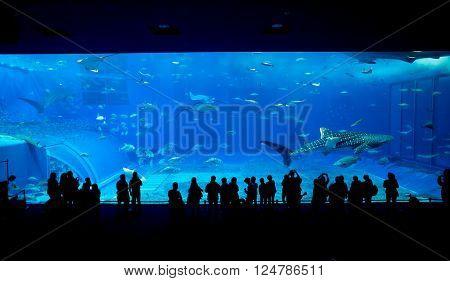 Aquarium in okinawa