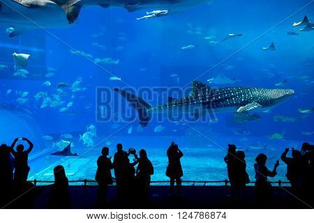 Whale shark at Churaumi aquarium in Okinawa