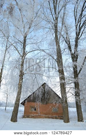 Homestead with a building with clay walls by the hoarfrost covered trees on sunny winter day