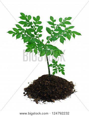 List of plants used in herbalism  Wikipedia