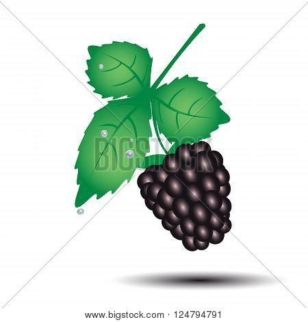 Colorful Blackberry Summer Fruit With Leaf Eps10