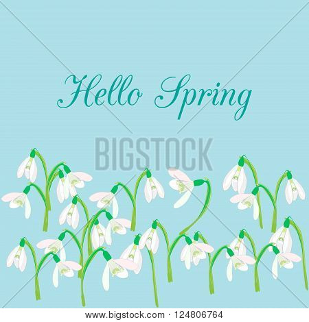 Snowdrops on a blue background. Spring vector illustration. Vector background with snowdrop. Background with flower. Illustrations of flowers. Spring background