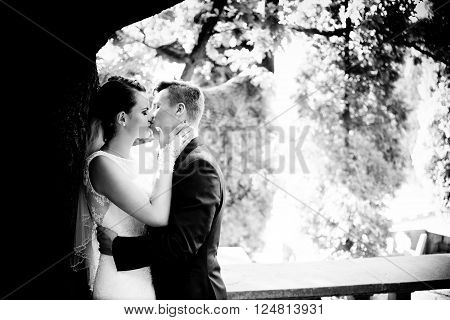 Newlyweds Kissing Under The Tree