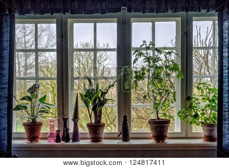 Window sill with flowers in clay pots