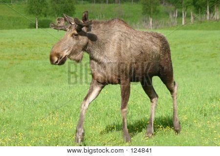 Elk Patrol