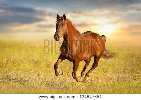 Red horse run gallop  against sunset sky