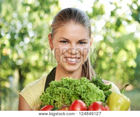 Young female gardener picking up fresh crop in her vegetable garden at sunny day. Woman peasant cultivating tomatoes and salad.