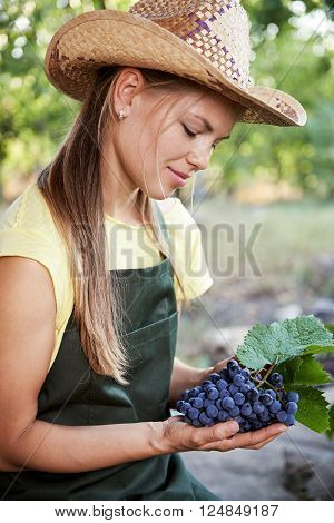 Young Caucasian female gardener growing grape in her vineyard in the autumn. Woman winemaker examining picked grape outdoors.