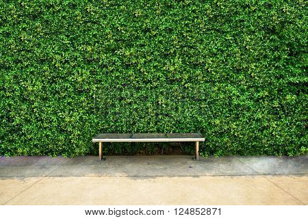 Green Leaf backdrop and the metal chair