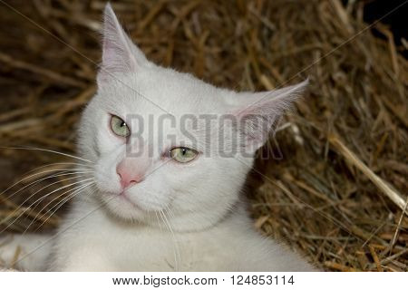 Mixed-breed White Young Cat, Sitting In Front Of White Background