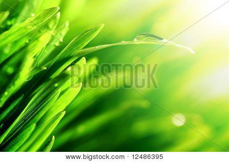 brilho de gota de água