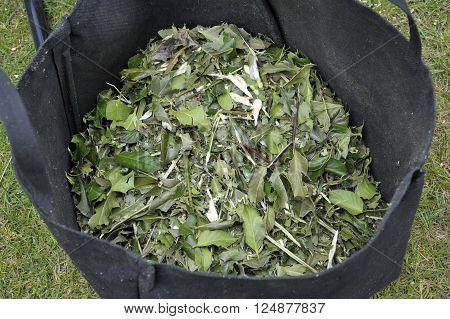 Woody garden shrub waste shredded for composting or use as mulch.