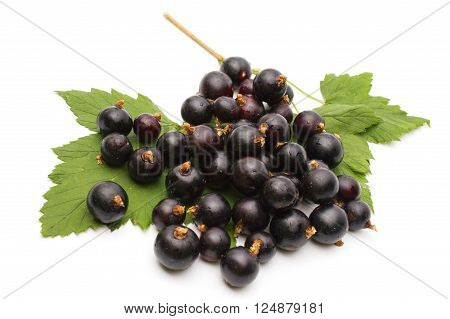 Branch of black currant on a white background. Fresh black currant