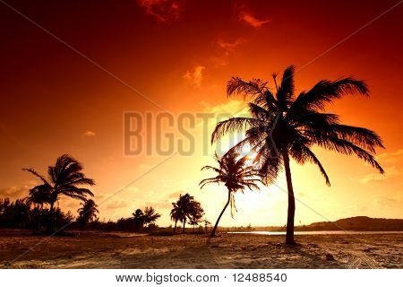palm in yellow sunrise sky